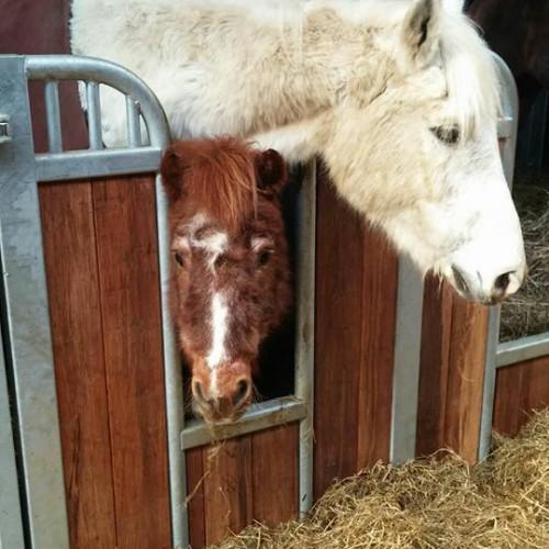 Paardenrusthuis-Klavertje-Vier-3